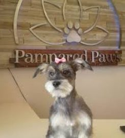 Pampered Paw's Express Salon & Spa